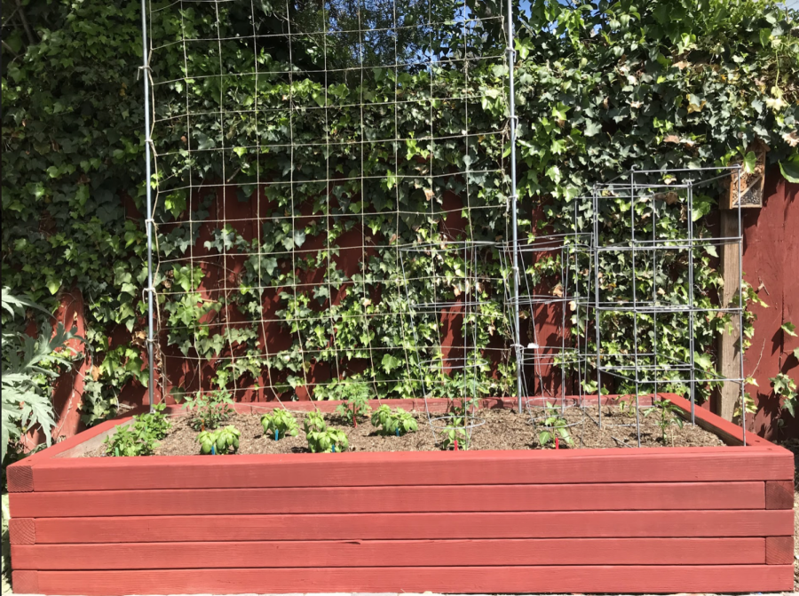 A raised bed of seedlings with support cages and a trellis.